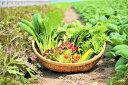 【ふるさと納税】オーガニック葉物野菜セット【植物性で育てた完