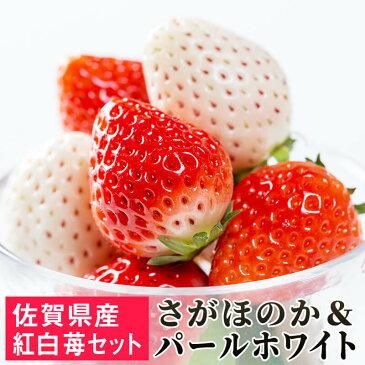 【ふるさと納税】SF003R 「パールホワイト」&「さがほのか」佐賀県産いちご 紅白セット