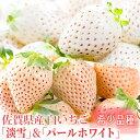 【ふるさと納税】KN19008R 【佐賀県産】白いちご「淡雪...
