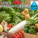 【ふるさと納税】直売所直送!しまばら旬の採れたて野菜セット(