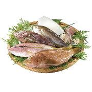 【ふるさと納税】季節の獲れたて旬魚(冷凍)