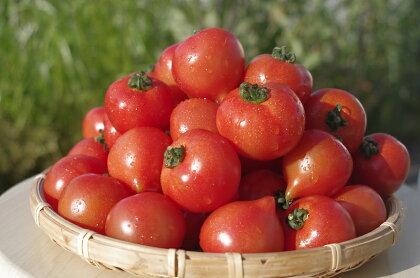 期間限定 大切に育てたフルティカトマト1.2kg