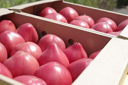 期間限定 真っ赤なトマトわけあり大容量6kg〜7kg