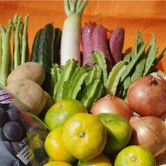 ふるさと納税野菜定期便 松浦市の季節の野菜セットとお米のレビュー 2