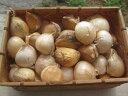 【ふるさと納税】 無農薬 ジャンボニンニク鱗片