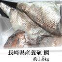 【ふるさと納税】長崎県産養殖鯛(フィーレ)