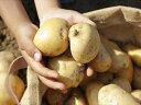 【ふるさと納税】飛子の馬鈴薯 じゃがいも 10kg(秋じゃが)