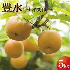 【ふるさと納税】豊水梨Lサイズ以上(約5キロ)【期間・数量限定】