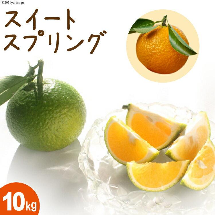 フルーツ・果物, みかん  10kg