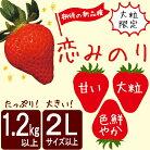 【ふるさと納税】【大粒限定】【1.2kg以上】いちご「恋みのり」期待の新品種2Lサイズ以上