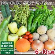 【自然の力で育てる】季節の旬野菜セット