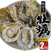 【数量限定!】雲仙産牡蠣・大サイズ2キロ(加熱用・殻付き)<ふるさと企画>【長崎県雲仙市】