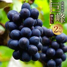 【ふるさと納税】巨峰種なし約2kg葡萄ブドウぶどうフルーツ果物果実ギフト長崎県産送料無料