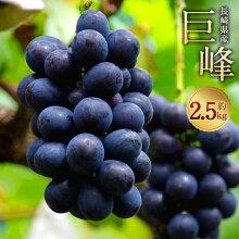 【ふるさと納税】巨峰約2.5kg葡萄ブドウぶどうフルーツ果物果実ギフト長崎県産送料無料