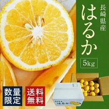 【ふるさと納税】長崎はるか柑橘8kg