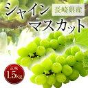 【ふるさと納税】長崎県産 シャインマスカット 正味1.5kg...
