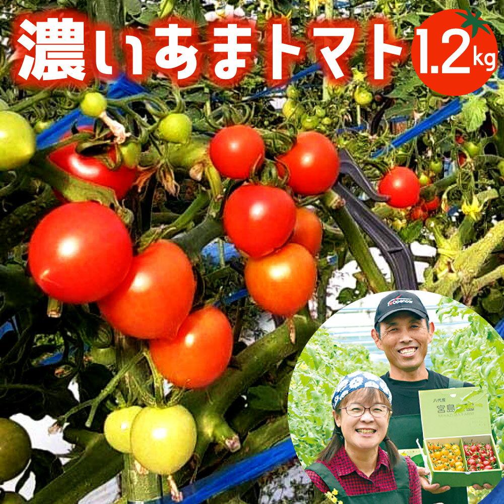 [先行予約]濃いあまトマト 1.2kg トマト 八代市産 宮島農園 サラダ 生野菜 冷蔵 国産 熊本県 九州 送料無料 予約 [2021年11月上旬より発送予定]