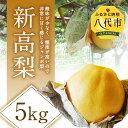 【ふるさと納税】新高梨 5kg 熊本県 八代市産 にいたか ...