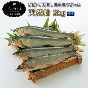 【ふるさと納税】天然鮎 冷凍 約2kg アユ あゆ 魚 魚介類 九州産 熊本県産 人吉産 送料無料