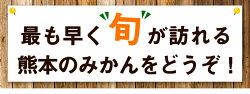 【ふるさと納税】お徳用訳あり 熊本県産ひとくちもぎたてみかん 約7kg(3.5kg×2箱) 2S-3Sサイズ 先行予約 熊本県産 ちょっと訳あり 期間限定 お徳用 フルーツ 秋 旬 柑橘 小玉 みかん 荒尾市《10月中旬-11月上旬頃より順次出荷》・・・ 画像2