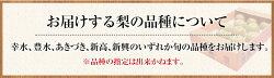 【ふるさと納税】熊本県荒尾市産 荒尾梨 約4kg(5玉〜16玉前後) 数量限定 なし フルーツ 果物 新鮮 クール便《8月上旬-9月上旬頃より順次出荷》・・・ 画像2