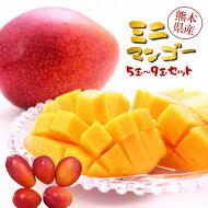 【ふるさと納税】ミニマンゴー5〜9玉