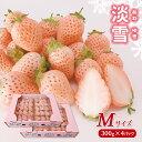 【ふるさと納税】 熊本玉名 白いちご「淡雪」(Mサイズ120