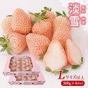 【ふるさと納税】 熊本玉名 白いちご「淡雪」(Lサイズ以上1