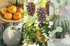 【ふるさと納税】フルーツ定期便小玉スイカ、メロン、ぶどう、梨、柿、5回発送【養生市場】