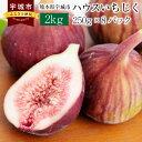 【ふるさと納税】熊本県宇城市産 ハウスイチジク 2kg 25...
