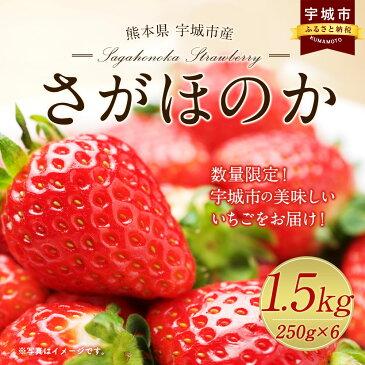 【ふるさと納税】数量限定 熊本県 宇城市産 さがほのか 250g×6パック いちご 合計1.5kg フルーツ 果物 送料無料