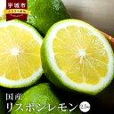 【ふるさと納税】 国産 リスボンレモン 2.5kg 九州産 ...