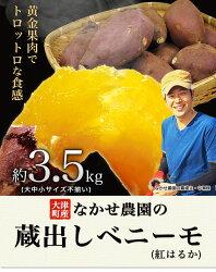 【ふるさと納税】熊本県大津町産 中瀬農園のベニーモ 約3.5kg(大中小サイズ不揃い)《11月中旬-12月上旬頃より順次出荷》 さつまいも 芋 紅はるか スイートポテト 干し芋にも 特産品・・・ 画像1