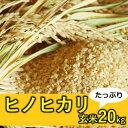 【ふるさと納税】山間地湧水米 ヒノヒカリ(玄米)たっぷり20