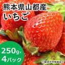 【ふるさと納税】山都産★みずみずしい苺★250g×4パック ...