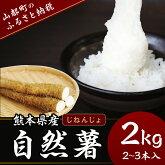 【ふるさと納税】熊本県産自然薯2kg