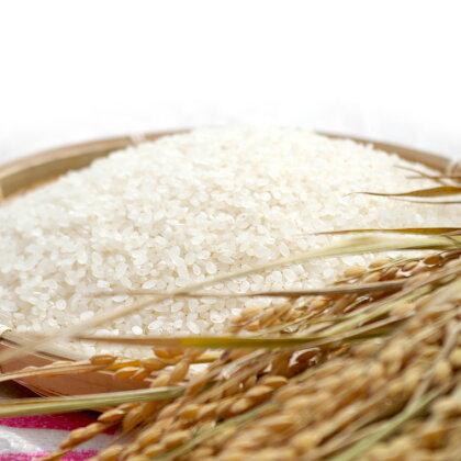 島木かぐや米 ヒノヒカリ 5kg