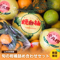 【ふるさと納税】柑橘詰め合わせセット(5種類・10kg以上)山本果樹園《30日以内に順次出荷(土日祝除く)》果物フルーツみかん