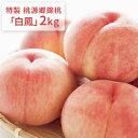 【ふるさと納税】特製 桃源郷錦桃「白鳳」2kg 【果物・もも...