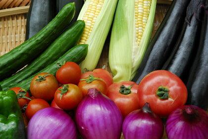 市長が認めた無農薬野菜!ほんまもん野菜セットB