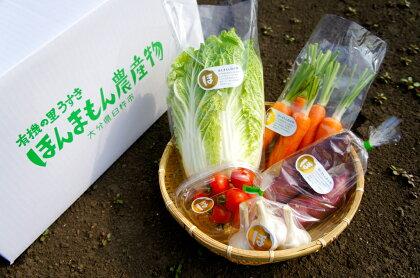完熟たい肥で育てるからおいしい!ほんまもん野菜セットA