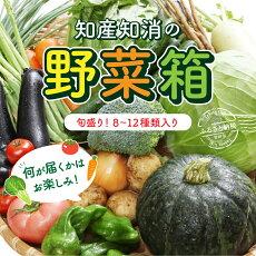 【ふるさと納税】旬盛り知産知消の野菜箱