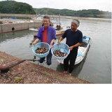 【ふるさと納税】新鮮!美味しい赤貝