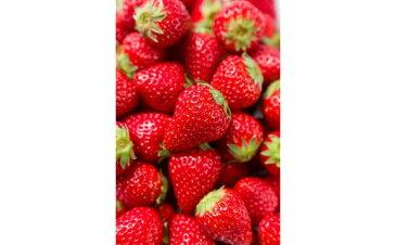 【ふるさと納税】【先行予約】甘熟いちご「紅ほっぺ」・2パック入×2箱(総量1kg以上)