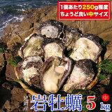【ふるさと納税】B306 延岡産天然岩牡蠣(生食用)5kg(中)(2021年4月から発送開始) 冷蔵 生牡蠣 殻付き 国産 宮崎県延岡市 産地直送 送料無料