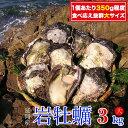 【ふるさと納税】延岡産天然岩牡蠣(生食用)3kg(大)