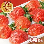 【ふるさと納税】苺大野屋厳選大粒やよいひめ大粒500g×1パック