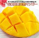 【ふるさと納税】完熟マンゴー 訳ありご家庭用(約1kg) 西