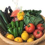【ふるさと納税】農家直送!新鮮お楽しみ野菜セット(9〜10品)
