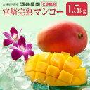 【ふるさと納税】酒井農園 完熟マンゴー1.5kg「ご家庭用」...